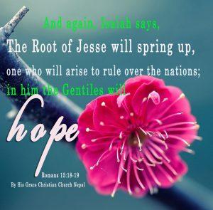 Romans 15 12